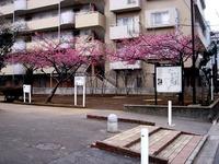 20140301_船橋市本町4_本町児童公園_桜_1632_DSC07193