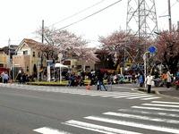 20150404_松戸市六高台の桜通り_六実桜まつり_1159_DSC08345