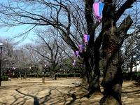 20140323_船橋市金杉6_御滝公園_御滝不動尊_桜_1301_DSC00507