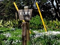 20140412_船橋市夏見台1_夏見緑地_菜の花_1425_DSC04801T