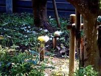 20150711_習志野市茜浜1_緑地帯_女性殺人事件_0850_DSC00058