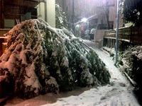 20160119_東京都_強い冬型の低気圧_積雪_大雪_0805_DSC00023T