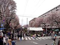 20150404_松戸市六高台の桜通り_六実桜まつり_1240_DSC00312