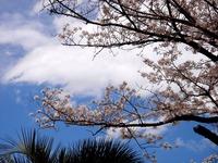 20140405_船橋市浜町2_ららぽーとTOKYO-BAY_桜_1205_DSC03793