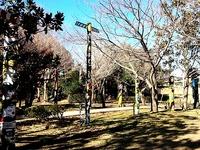 20131216_流山市総合運動公園_トーテムポール_112