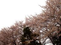 20160403_習志野市大久保_ハミングさくらまつり_1315_DSC00191