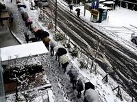20160119_東京都_強い冬型の低気圧_積雪_大雪_1154_DSC00006T
