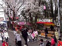20150404_松戸市六高台の桜通り_六実桜まつり_1238_MAH00307020