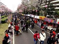 20150404_松戸市六高台の桜通り_六実桜まつり_1232_MAH00304040