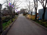 20140323_船橋市_海老川_花見_屋台_桜_1552_DSC00669