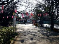 20140329_船橋市薬円台4_薬円台公園_桜_1531_DSC01482
