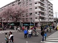 20150404_松戸市六高台の桜通り_六実桜まつり_1240_DSC00313