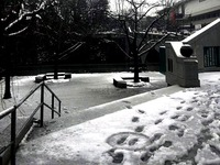 20160119_東京都_強い冬型の低気圧_積雪_大雪_0732_DSC00027T