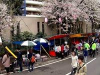 20150404_松戸市六高台の桜通り_六実桜まつり_1238_MAH00307030