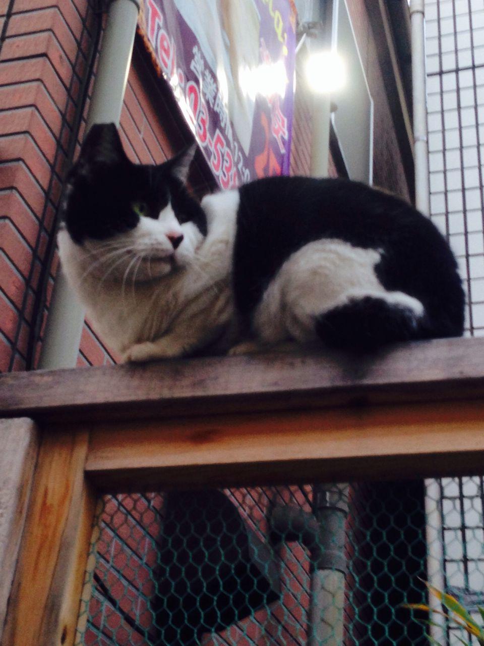 image カメラ目線とか絶対しない大久保の野良猫。 うーん。実にニヒル。 ビーボ... ニヒル