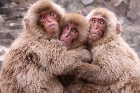 37815__three-adorable-monkey_p