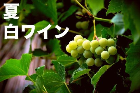 grapes-3628151_1920