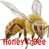 Honey☆Bee ☆Xbox360版MHF社会人限定猟団☆