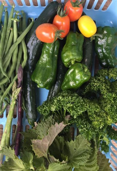 今日の菜園、少量多品種