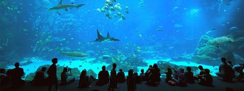 ga-aquarium-oceanvoyager-header-sm