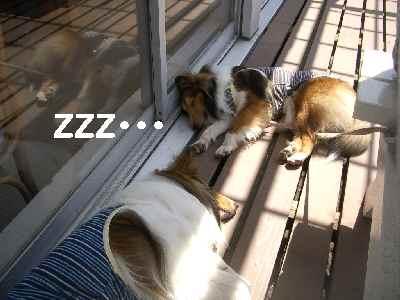 疲れてねんね