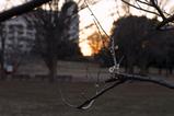 朝陽と梅_撮影風景