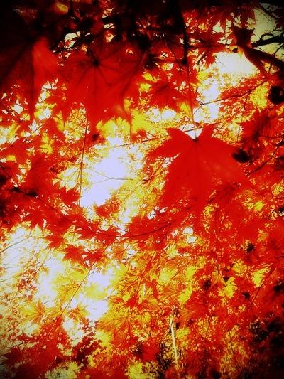秋が流れて