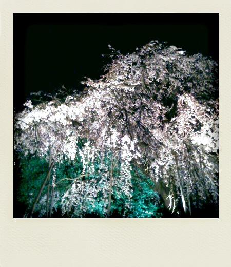 妙法寺の夜桜