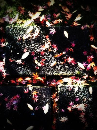 紅葉降る石畳