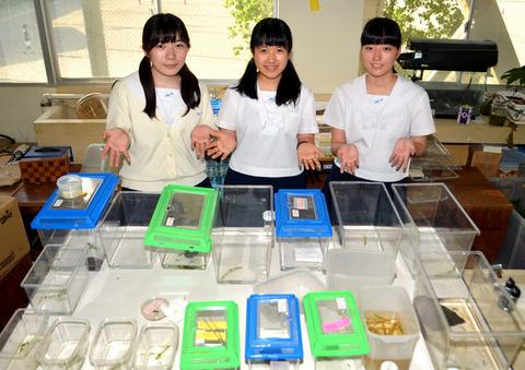 【画像】女子高生3人がアメンボの新種を発見