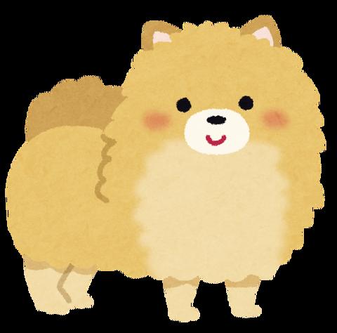 dog_pomeranian
