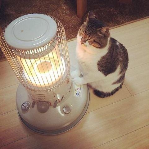 ガチで最強の暖房器具wwwwwwwwwwwwwwwwww