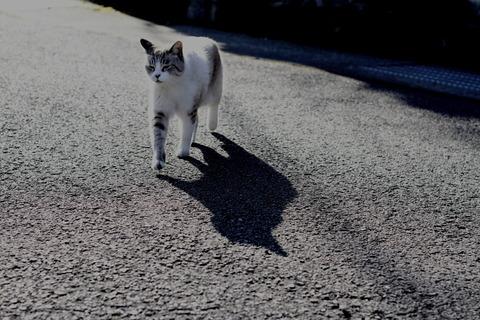 【画像あり】完全に猫の陰だと思ったら・・・