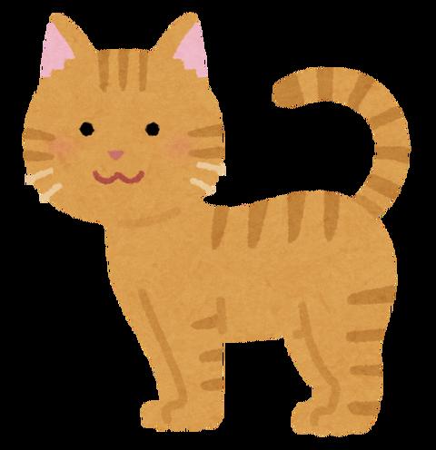 【動画あり】猫に話しかけようとしたら彼氏猫に邪魔されたwwwwwww