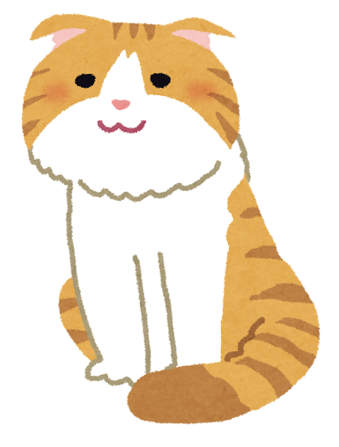 cat_scottish_fold