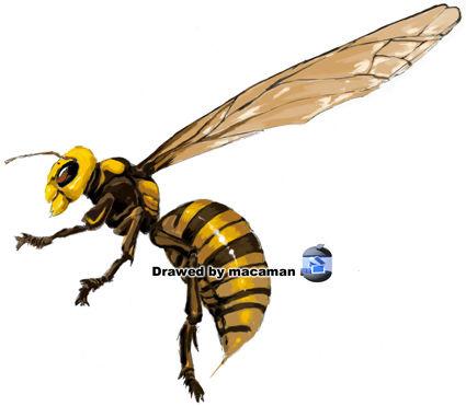 スズメバチの画像 p1_13