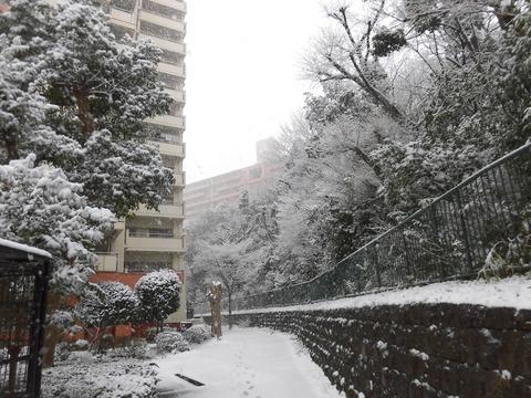 H30年初雪 (2)