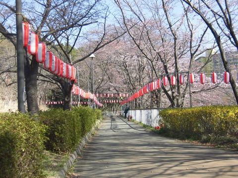 桜まつり会場 (3)