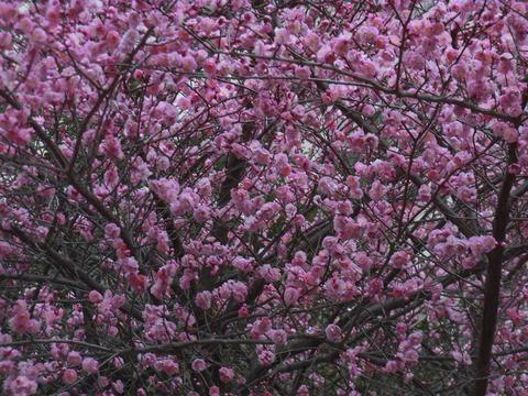 桃の花19棟 (2)