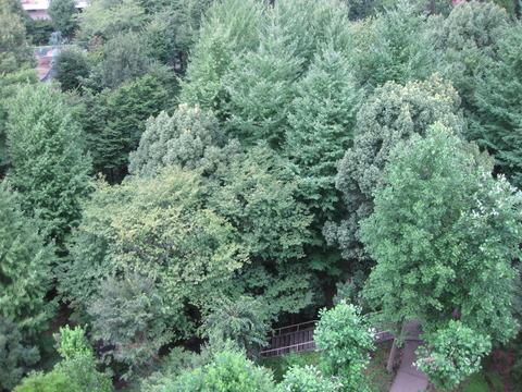 若葉台の森ー10階から (2)