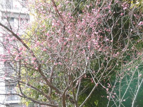 春の兆し (3)