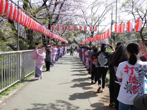 桜まつり、踊り連 (3)