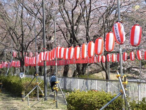 桜まつり会場 (2)