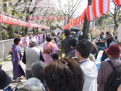 桜まつり、踊り連 (5)