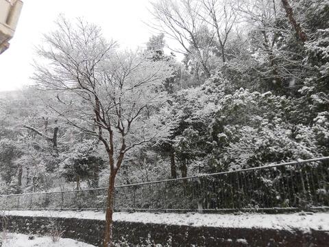 H30年初雪 (5)