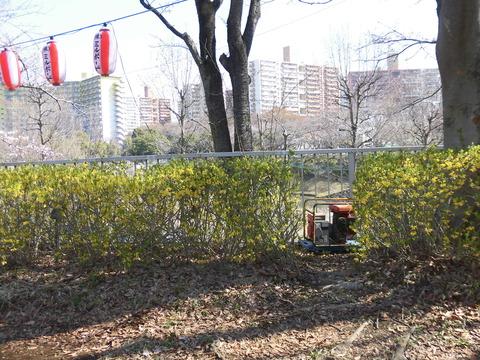桜まつり会場 (4)