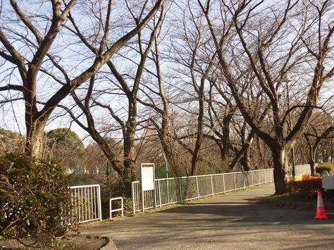 桜-遊水池グランド