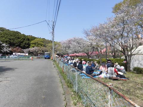 桜まつり、見物客 (3)