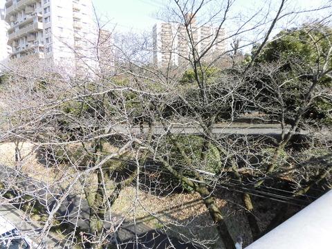 桜-バス通り歩道橋