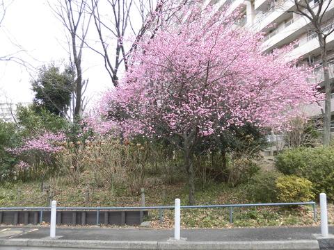 桃の花19棟
